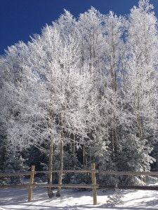 Beautiful snow dusted trees.
